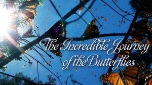 journey-butterflies-vi